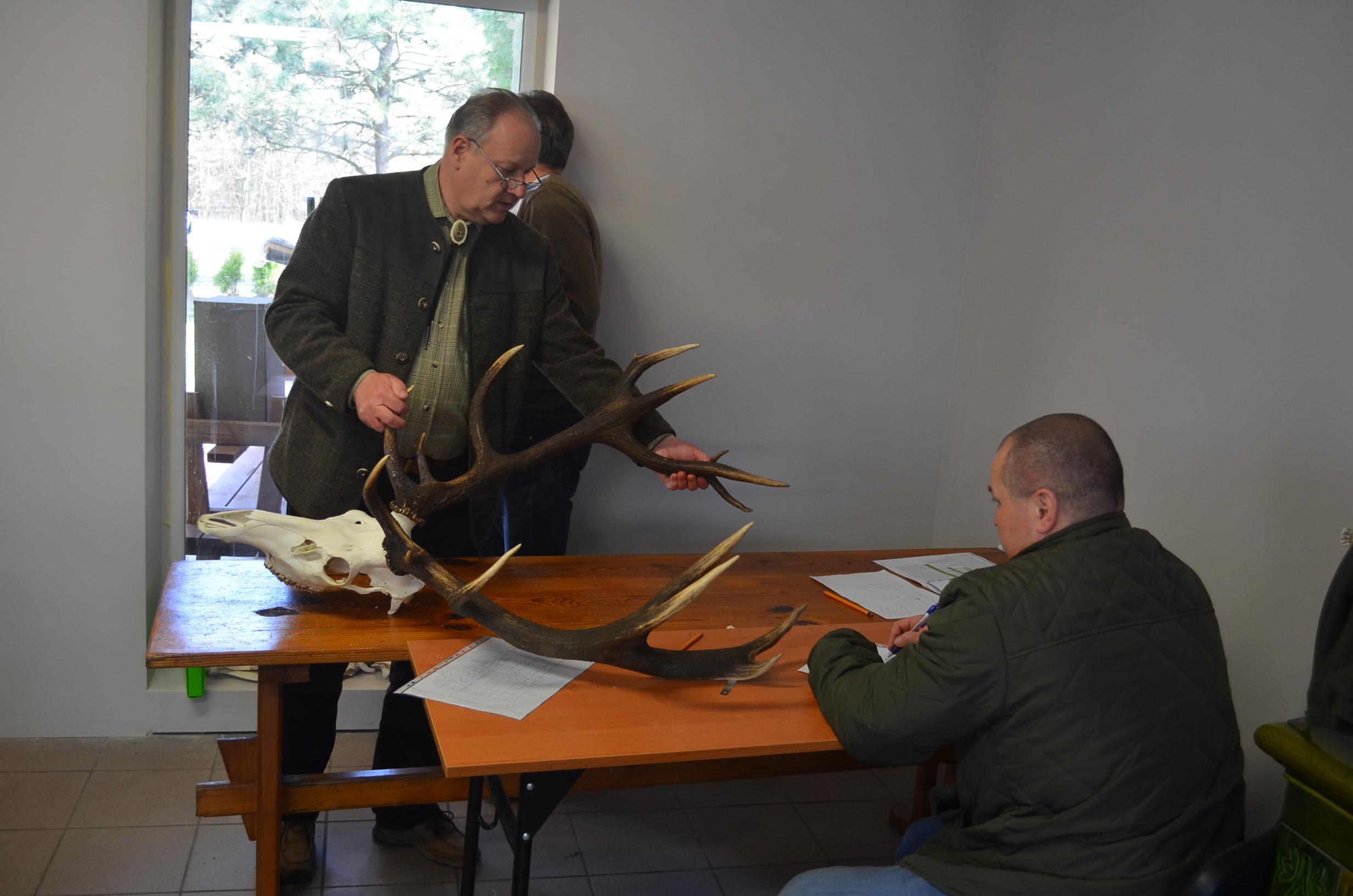 Ocena prawidłowości odstrzału byków jelenia szlachetnego – terminy